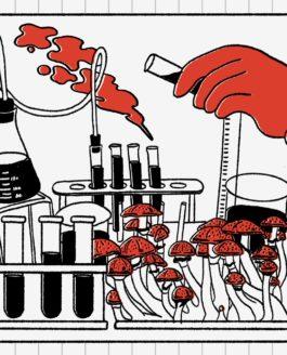 L'avènement des pilules de psilocybine